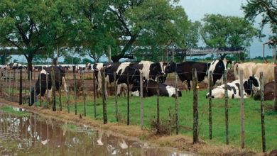 Photo of Consumo propone controlar el bienestar animal con cámaras en los mataderos