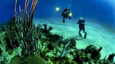 Photo of Andalucía será pionera en la creación de talleres destinados a la regeneración de arrecifes de coral