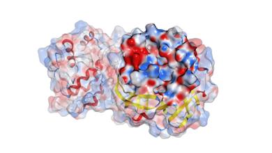 Photo of IQS desarrolla un potencial inhibidor de proteasa para combatir el COVID-19