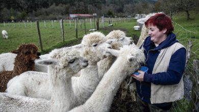 Photo of Alpacana: Prendas con lana de alpacas cántabras