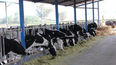 Photo of AgroCantabria contribuye a garantizar el suministro de alimentos básicos como leche y carne