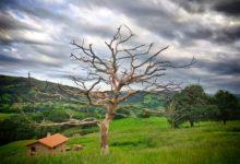 Photo of La actual crisis provocará un desplazamiento de la población al medio rural