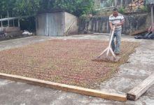 Photo of EthicHub comercializará el café de sus agricultores