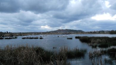 Photo of Costas prorroga 10 años la concesión de FNHY para restaurar las marismas de Alday