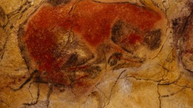 Photo of El Museo de Altamira retoma las visitas a la cueva a partir del 15 de agosto