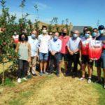 Photo of Empieza la recogida de la manzana en Girona, que se prevé un 14% inferior a la de 2019