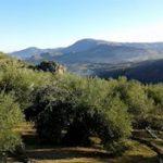 Photo of Economía-Cooperativas Agro-alimentarias lamenta la decisión de EE.UU. de mantener los aranceles sobre el olivar español
