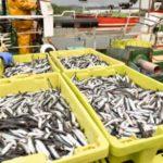 Photo of Agricultura cierra el próximo martes la pesquería de anchoa del Cantábrico y Noroeste para 2020