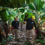 Photo of Productores Plátano de Canarias tildan de «varapalo» para España que se siga sin resolver el futuro del POSEI