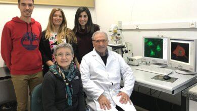 Photo of Investigadores UC-IDIVAL describen en 'Science' un nuevo mecanismo neuronal relacionado con la ELA
