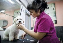 Photo of Los negocios le abren sus puertas a las mascotas