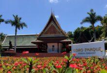 Photo of Loro Parque anuncia su reapertura tras más de 13 meses de cierre