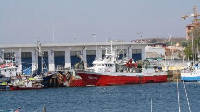 Photo of La campaña de la sardina en España comienza este lunes con un cupo de 7.193 toneladas